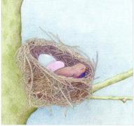 tl-birds_nest_card